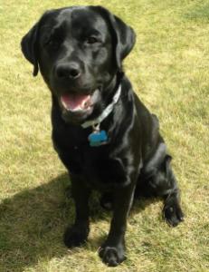 jax 2 years old
