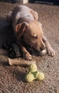 Destiny and her pile of toys