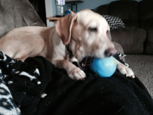 Destiny loves this ball!