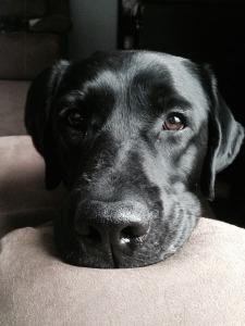 Jax, Professional Beggar