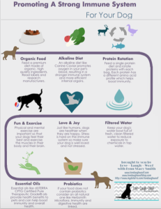 Promoting a Strong Immune System for Your Dog