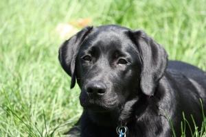 Puppy Jackson
